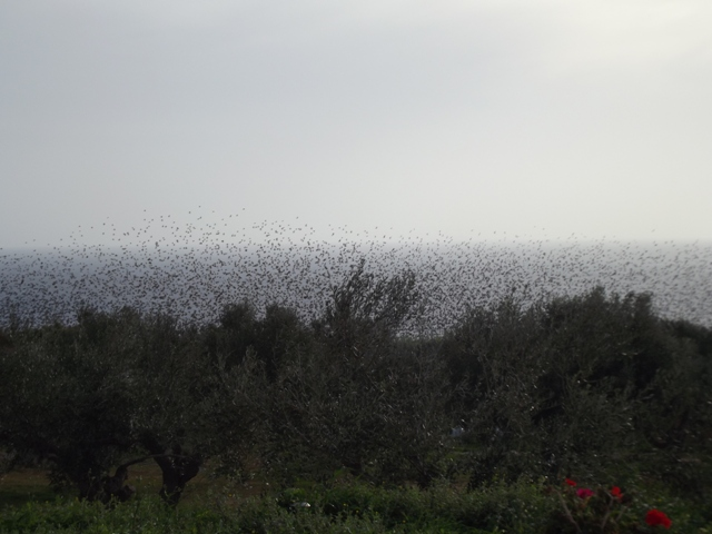 flock at Tsapi