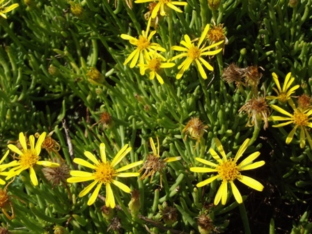 Flowers on Methoni beach