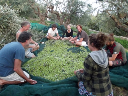 olive harvest Gargarou Retreat2014